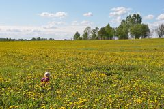 Little child among flowers stock image