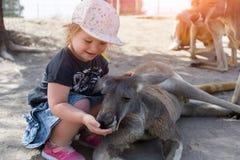 Little child girl age 1-2 feed grey kangaroo in Israel stock photography