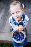 Little child girl with basket full of plums Royalty Free Stock Photography