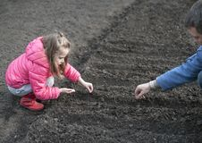 Little child girl helping her father to plant the seeds royalty free stock photos