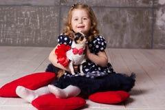 Little child girl is holding small chuhuahua dog Royalty Free Stock Photo
