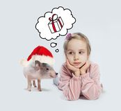 Little child girl and pig in Santa hat on white background. Christmas child and pet royalty free stock images