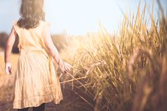 Little child girl walking and touching young rice. With tenderness in the paddy field in vintage color tone Stock Images