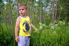 Little child has lost in wood and look round Royalty Free Stock Photo
