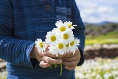 Little Child Is Holding A Bouquet Of Daisy Flower. Cute Little Kid Is Holding A Bouquet Of Daisy Flower. Sunny And Spring Flower Field stock image