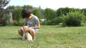 Little child hugs and strokes a husky puppy in the garden stock video