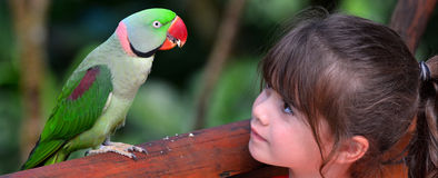 Little child looks at Alexandrine Parrot. Little child (girl age 5-6) looks at Alexandrine Parrot native to India and South East Asia Stock Images