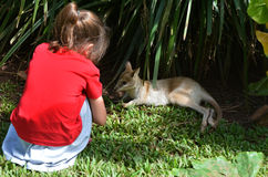 Little child looks at a baby wallaby cub in Queensland, Australi. Little child (girl age 5-6) looks at a baby wallaby cub in Queensland, Australia Royalty Free Stock Image