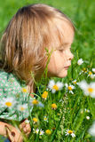 Little child on the meadow Stock Images