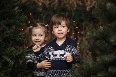 A little child by the New Year tree. Children decorate the Chris. Tmas tree. Baby in a sweater by a green tree in studio.r Royalty Free Stock Image