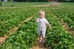 Little child on organic strawberry farm Royalty Free Stock Photo