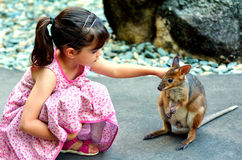 Little child petting a wallaby in Queensland, Australia Royalty Free Stock Photography