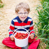 Little child picking and eating strawberries on berry farm Royalty Free Stock Photos