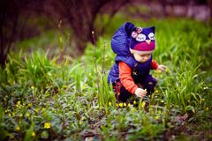 Little child picking flowers on street. Young cute child in warm clothes collecting flowers on green lawn royalty free stock images