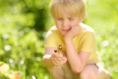 Little child picking sweet wild strawberry in domestic garden royalty free stock photos