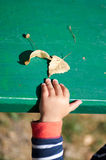 A little child play with autumnal leaves Stock Photo