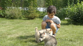 Little child play with husky puppies in the garden stock video