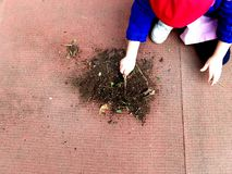 Little child playing, expolring and gardening in the garden with soil, leaves, nuts, sticks, plants, seeds during a school stock image