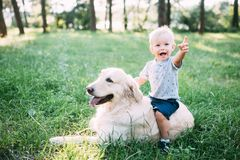 Little child playing with Labrador retriever dog together in wood stock photos