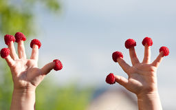 Little child's hands with raspberries Stock Photo