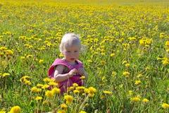Little child sitting among dandelions Stock Photo