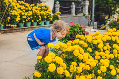 Little child is sniffing yellow sunflower. Joyful background. Kid is playing outdoor Stock Image
