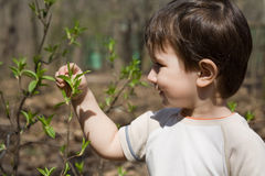 Little child is in the spring forest Royalty Free Stock Photography