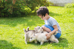 Little child strokes many husky puppies in outdoors Stock Images
