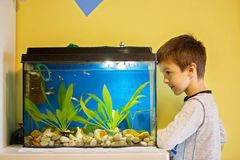 Little child, studying fishes in a fish tank, aquarium