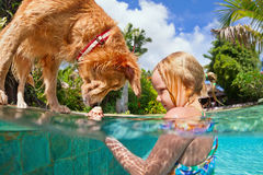 Little child swim with dog in blue swimming pool. royalty free stock photography