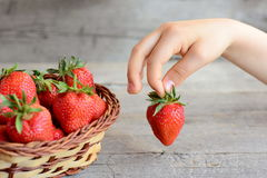 Little child takes a strawberry from a basket. Child holds a red strawberry in hand. Vitamin summer food for kids Royalty Free Stock Photos