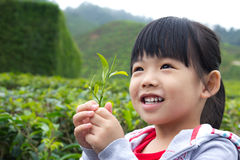 Little child at tea plantation. Young child holding a tea leaf in her hand Royalty Free Stock Photo