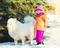Little child walking with white Samoyed dog on snow in winter Stock Photography