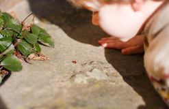 Little child watching and explorering a ladybug. Royalty Free Stock Photo
