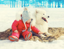 Little child with white Samoyed dog sitting on snow in winter Royalty Free Stock Images