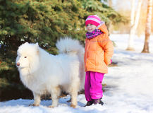 Little child with white Samoyed dog on snow in winter Royalty Free Stock Image