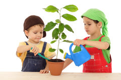 Little children caring for plant. Isolated on white Royalty Free Stock Photos