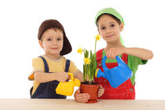 Little children caring for potted narcissus. Isolated on white Stock Photography