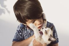 Little children and pet puppy cat in outdoors image royalty free stock photography