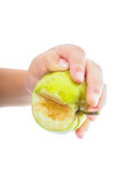 Little childs hand holding an unripe green apple Stock Image