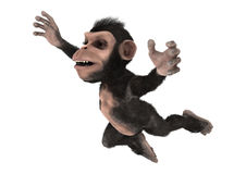 Little Chimp Stock Image