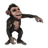 Little Chimpanzee Royalty Free Stock Photos