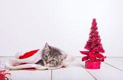 Little christmas cat Stock Photos