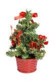 Little christmas tree Stock Photos