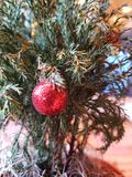 Little Christmas Tree stock image