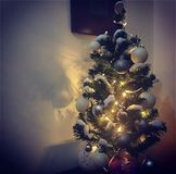 Little christmas tree royalty free stock photography