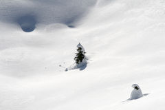 Little christmas trees isolated under snow Royalty Free Stock Images