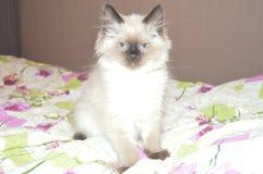 Little smart and posing kitten stock image