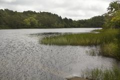 Little Cliff Pond in Nickerson State Park on Cape Cod. Freshwater of Little Cliff Pond at Nickerson State Park on Cape Cod in Brewster, Massachusetts stock images