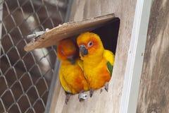 Little color parrots Stock Photography